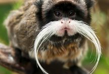 Monkeys / by Mackenzie Wade
