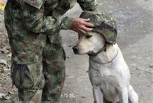 Cute Dogs / I'm a dog lover / by Carolene Amy