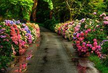 Secret • Garden  / by Amanda DeVore