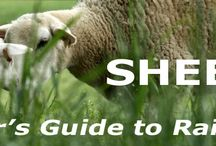 Raising Sheep / by The Homespun Journal