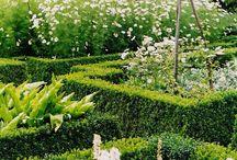 Sandton Garden / by Jo Clinton
