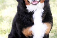 Pooches and cute animals  / by Wendi Hutchinson