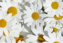 Floral / by Daisy Stevenson