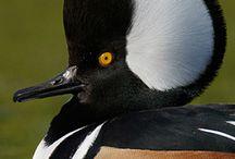 Bird 3 / by Patricia Stautihar