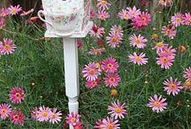 Garden / by Nancy Poza