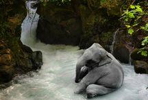 ELEPHANTS / by Wendy Jantz