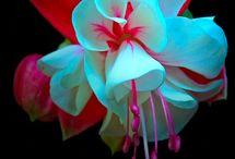 bellas!! flores / by Leticia Ortiz