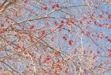 Trees & Nature / by Sheri Lemmon