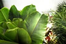 Botanicals / by Patti Friday