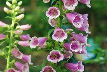 gardening / by Jane Newton