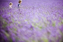 The color purple  / by Samantha Romano