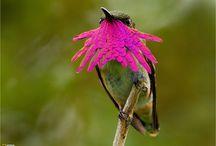 Birdies y Pajaritos / by Kris Robles