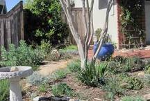 California Natives in the Garden / by David Helphrey