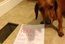 Bad Dog Signs :D / by Kristin Meisel