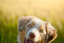 Aussies / by Amber Lavergne