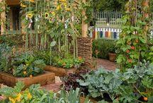 Garden! / by Melissa Michaux