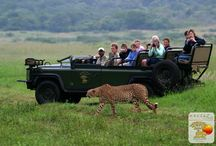 Activites at Mkuze Falls  / Mkuze Falls offers Open vehicle Game Drives, Guided Walks as well as Safari Boat Cruise  offering a different game viewing experience.  / by Mkuze Falls Private Game Reserve