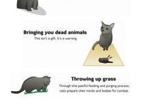 Animals / by Samantha Hall
