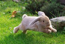 Bunnies / by Anne Osborn