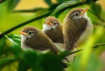 Flora & Fauna / by Jennifer Jones