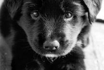ADORABLE dogs / by Jennissa Janzen