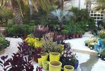 Gardencenter Ideas / by Roel van Heeswijk