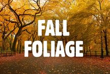 Fall Foliage / Fall Foliage in NYC / by New York
