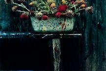 Dark & Autumnal / by Jane ~ Tea with Ruby