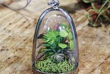 Succulents!!! / Variety of Succulents - caring & use of decorating garden & home / by Chris Ebanez