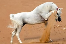 Horses / by Sarah Hughes