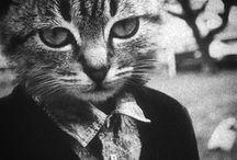 I Love Cats... / by Kristin Berg