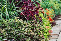 Lawn & Flowerbeds / by Brandy Lewis