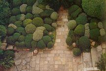 Plan a Garden: topiary & hedge / by Killiecrankie Farm Nursery & Christmas Tree Farm