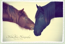 Equus / Training advice, care tips, pretty pictures, factoids, a few cartoons - for those of us who are irresistibly drawn to horses! / by Rebecca Hagen