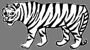 Tiger / Years: 1902, 1914, 1926, 1938, 1950, 1962, 1974, 1986, 1998, 2010 / by Aligned Signs