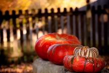 Seasons - Fall / by Alissa Swartz