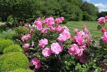 P #66 Garden Love / by Kelsey/TheNaptimeChef