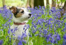 Bluebells / Get inspired for spring with the fresh hues of china blue and enchanting twilight purple. / by EziBuy