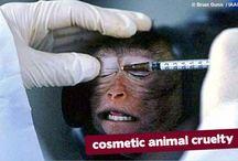 Cruelty Free Cosmetics / by Ariana