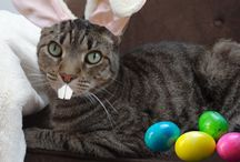 Easter Cats / Cats getting ready to celebrate with easter eggs and jelly beans (not for them to eat of course, just as props!) / by Tamar Arslanian