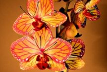 Nature ~ Orchid Opulence ~ / by Sue Berberick