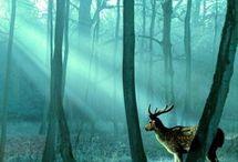 Deer / by katie