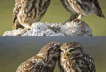 Owls / by Joleen Bennett