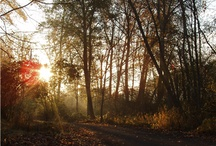 RTC: Pic of the Day / by Rails-to-Trails Conservancy
