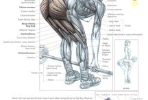 Leg Exercises / by CTD Sports