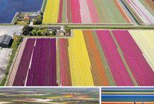 Colours / by Astrid Askjem Velle