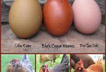 Chicken goodies! / by Christi Morris