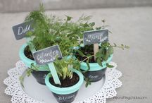 Herbs / by Jill Tinklenberg
