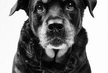 Dogs / by Colette Singla