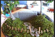 Miniature dish & fairy gardens / by Sue Harris